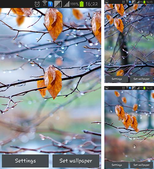 In addition to live wallpaper Photo cube 3D for Android phones and tablets, you can also download Autumn raindrops for free.