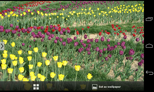 Screenshots of the Beautiful flowers for Android tablet, phone.