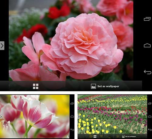 In addition to live wallpaper Galaxy alpha for Android phones and tablets, you can also download Beautiful flowers for free.