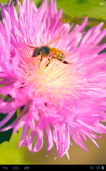 Bee on a clover flower 3D
