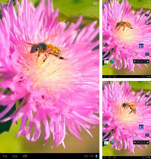 In addition to live wallpaper Watching corn for Android phones and tablets, you can also download Bee on a clover flower 3D for free.