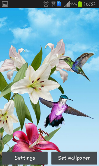 Download livewallpaper Birds for Android. Get full version of Android apk livewallpaper Birds for tablet and phone.