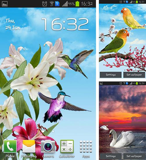 In addition to live wallpaper Blue impulse for Android phones and tablets, you can also download Birds for free.