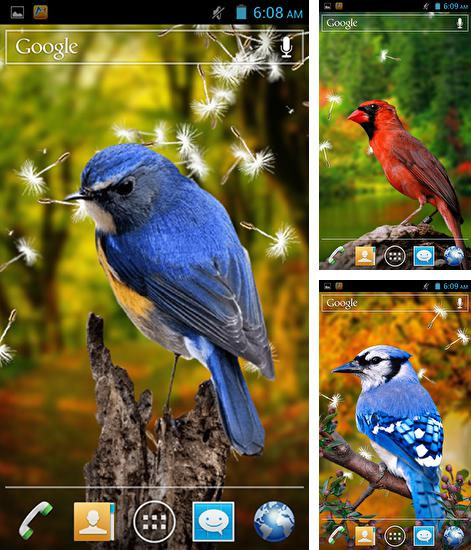 In addition to live wallpaper Fruits in the water for Android phones and tablets, you can also download Birds 3D for free.