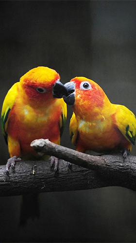 Birds by Happy live wallpapers
