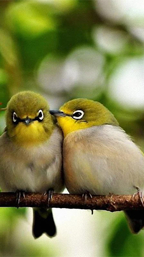 Birds by Pro Live Wallpapers