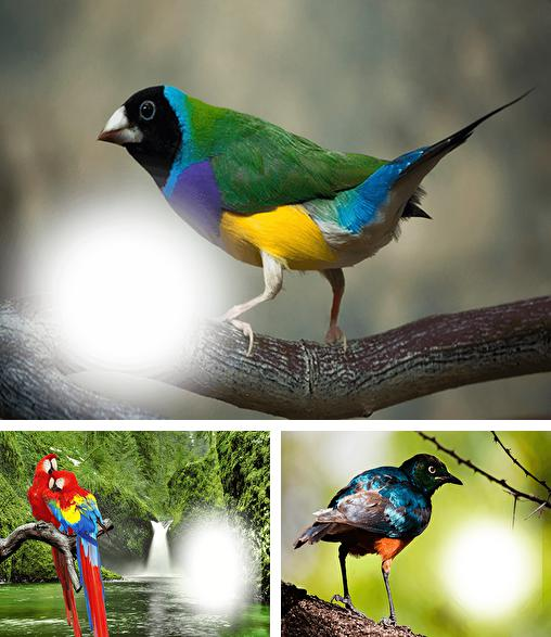In addition to live wallpaper Forest HD for Android phones and tablets, you can also download Birds photo frames for free.