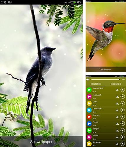 Download live wallpaper Birds sounds and ringtones for Android. Get full version of Android apk livewallpaper Birds sounds and ringtones for tablet and phone.