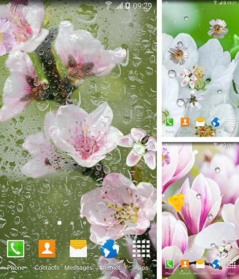 In addition to live wallpaper The Goose for Android phones and tablets, you can also download Blooming trees for free.