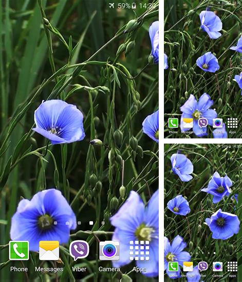 In addition to live wallpaper Mermaid for Android phones and tablets, you can also download Blue flowers by Jacal video live wallpapers for free.