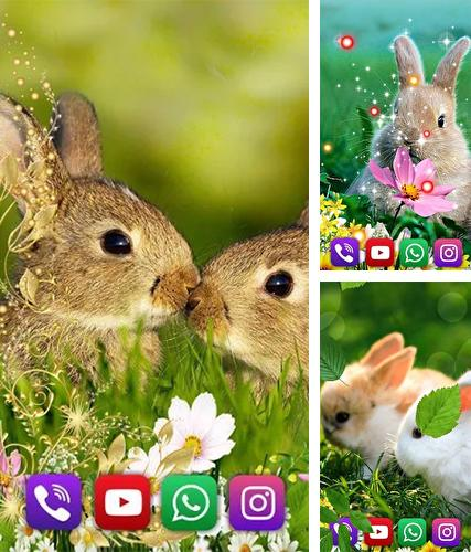 Download live wallpaper Bunnies for Android. Get full version of Android apk livewallpaper Bunnies for
