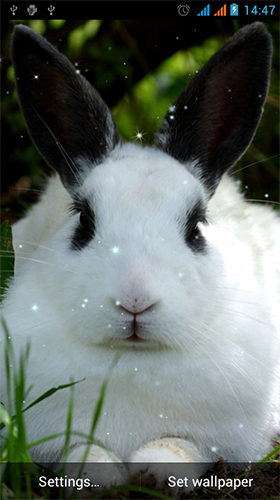 Bunny by Live Wallpapers Gallery