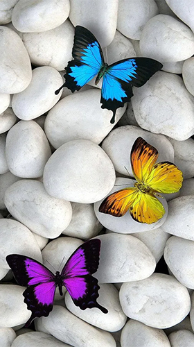 Kostenloses Android-Live Wallpaper Schmetterlinge. Vollversion der Android-apk-App Butterflies by Happy live wallpapers für Tablets und Telefone.