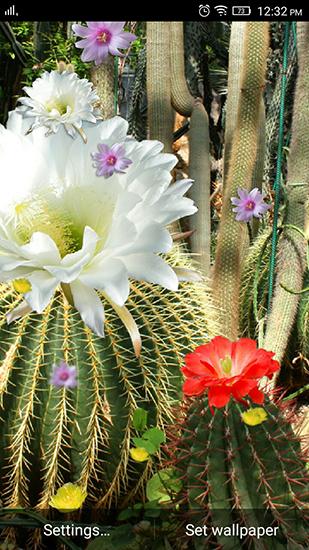 Descargar Cactus Flowers Para Android Gratis El Fondo De Pantalla