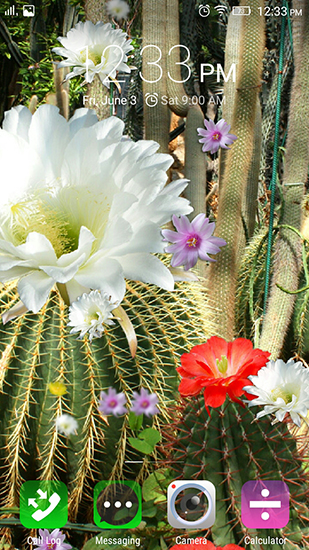 Screenshots of the Cactus flowers for Android tablet, phone.