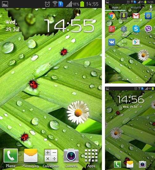 In addition to live wallpaper Steampunk clock for Android phones and tablets, you can also download Camomiles and ladybugs for free.