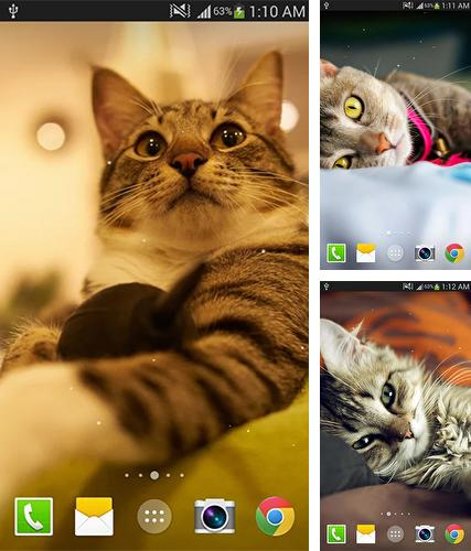 Kostenloses Android-Live Wallpaper Katze. Vollversion der Android-apk-App Cat by Live wallpaper HD für Tablets und Telefone.
