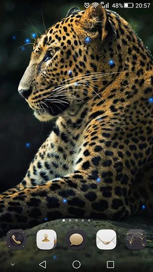 Cheetah Pour Android 224 T 233 L 233 Charger Gratuitement Fond D