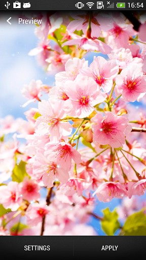 Cherry Blossom Live Wallpaper For Android Cherry Blossom Free Download For Tablet And Phone