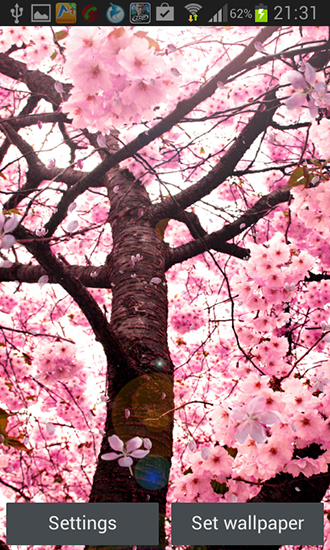 Cherry blossom by Creative factory wallpapers für Android spielen. Live Wallpaper Kirschblüten kostenloser Download.