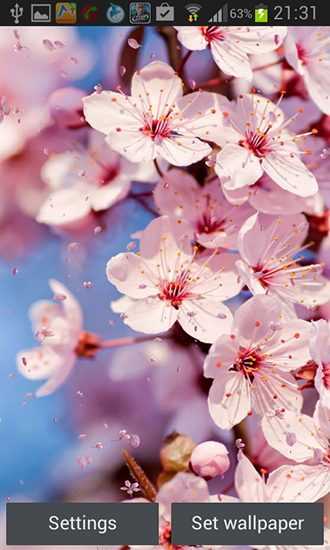 Cherry Blossom By Creative Factory Wallpapers Para Android Baixar