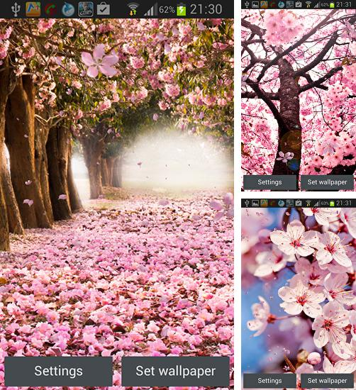 In addition to live wallpaper Beautiful seascape for Android phones and tablets, you can also download Cherry blossom by Creative factory wallpapers for free.
