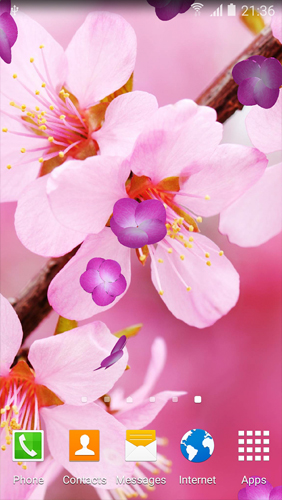 Download Cherry Blossom - livewallpaper for Android. Cherry Blossom apk - free download.