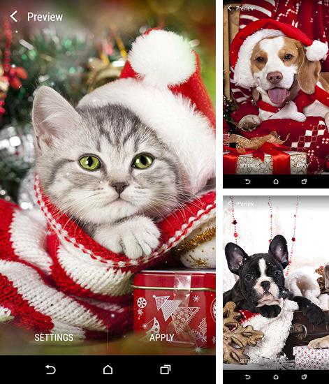 In addition to live wallpaper Star orbit for Android phones and tablets, you can also download Christmas animals for free.