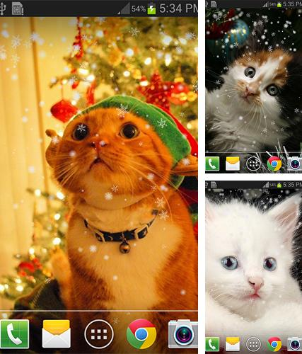 Christmas cat by live wallpaper HongKong