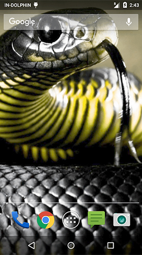 Cobra attack live wallpaper for Android  Cobra attack free
