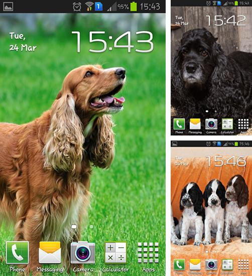 In addition to live wallpaper Aurora: Winter for Android phones and tablets, you can also download Cocker spaniel for free.