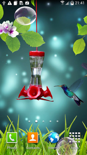 Colibri Live Wallpaper For Android Colibri Free Download For