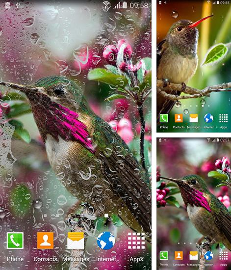 In addition to live wallpaper Raindrops for Android phones and tablets, you can also download Colibries for free.
