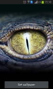 Crocodile eyes - download free live wallpapers for Android. Crocodile eyes full Android apk version for tablets and phones.