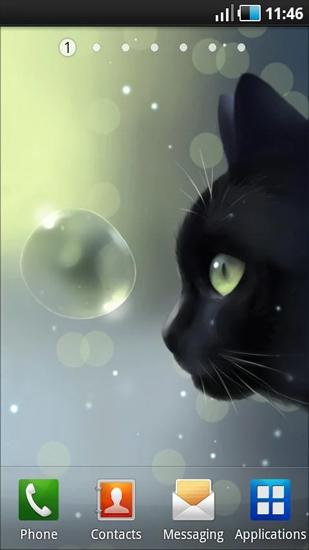 Descargar Curious Cat Para Android Gratis El Fondo De