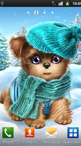 Cute and sweet puppy: Dress him up