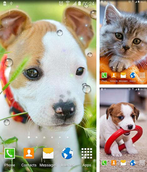 In addition to live wallpaper Water drops by Top Live Wallpapers for Android phones and tablets, you can also download Cute animals for free.
