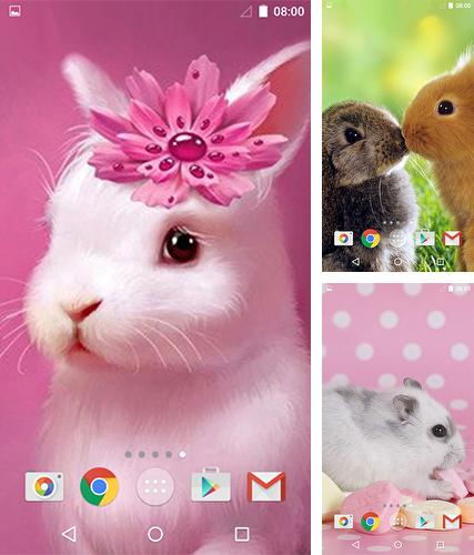 Cute animals by MISVI Apps for Your Phone