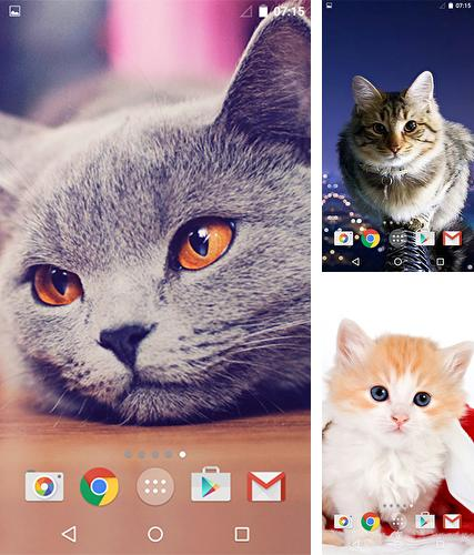 Baixe o papeis de parede animados Cute cats by MISVI Apps for Your Phone para Android gratuitamente. Obtenha a versao completa do aplicativo apk para Android Cute cats by MISVI Apps for Your Phone para tablet e celular.