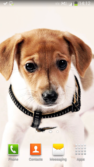Download Cute dogs - livewallpaper for Android. Cute dogs apk - free download.