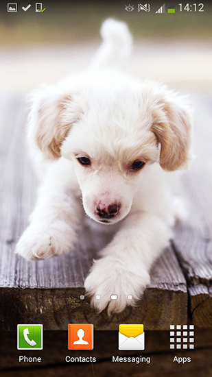 Screenshots of the Cute dogs for Android tablet, phone.