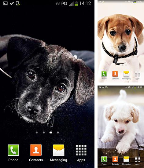 In addition to live wallpaper Material for Android phones and tablets, you can also download Cute dogs for free.