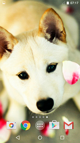 Download Cute dogs by MISVI Apps for Your Phone - livewallpaper for Android. Cute dogs by MISVI Apps for Your Phone apk - free download.