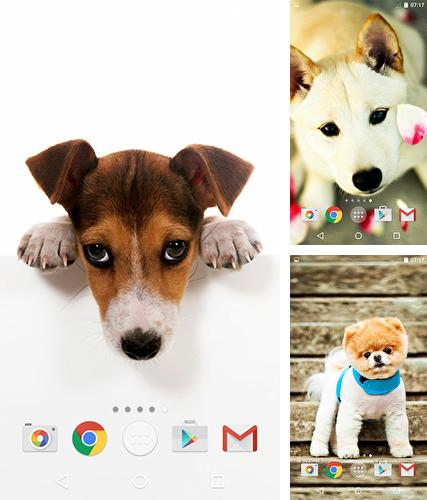 Descarga gratuita fondos de pantalla animados Perros lindos para Android. Consigue la versión completa de la aplicación apk de Cute dogs by MISVI Apps for Your Phone para tabletas y teléfonos Android.