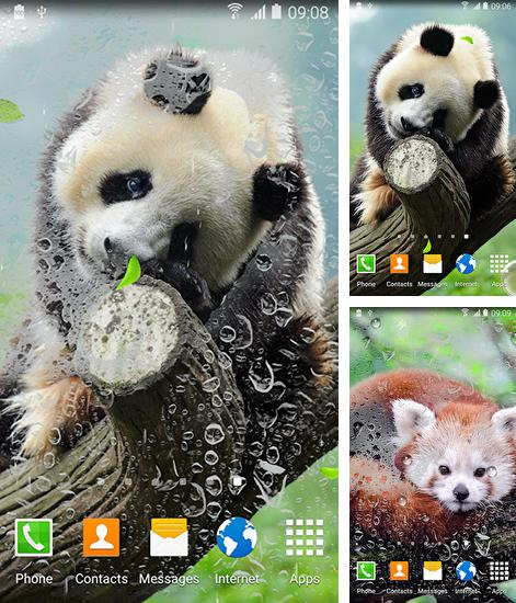 In addition to live wallpaper Light wave for Android phones and tablets, you can also download Cute panda for free.