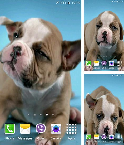 In addition to live wallpaper Snowflakes for Android phones and tablets, you can also download Cute puppies for free.