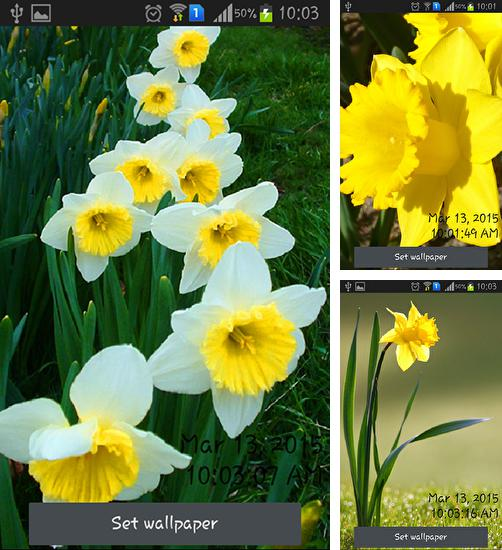 In addition to live wallpaper Octopus for Android phones and tablets, you can also download Daffodils for free.