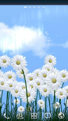 Daisies Live Wallpaper For Android Daisies Free Download