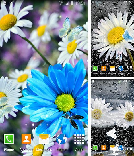 In addition to live wallpaper Forest birds for Android phones and tablets, you can also download Daisies by Live wallpapers 3D for free.