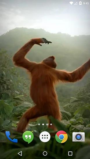 Dancing monkey pour android t l charger gratuitement for Fond ecran tablette android gratuit
